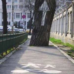 top7 arbre avec signalisation sur piste cyclable